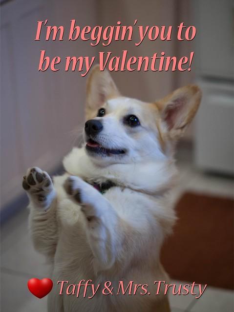Taffy Valentine 2017