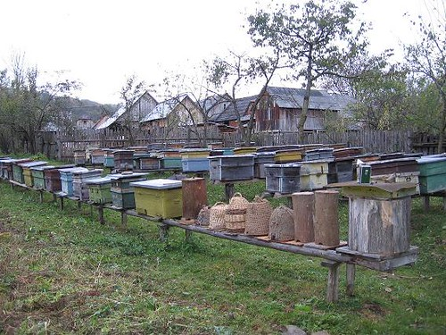 the evolution of hives from right to left | by dana grad
