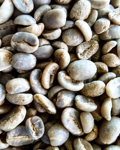 green Ethiopia Yirga Cheffe Haricha - Dry Processed
