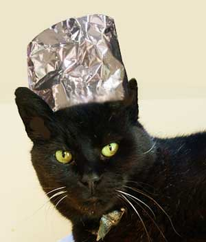 Cat With Tin Foil Hat On