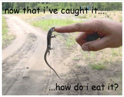 "one VERY hungry lizard | ""Never eat anything bigger than ..."