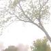 Tree in the fog - DSCN2673