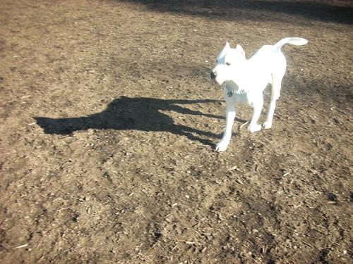 Aptos Dog And Cat Grooming
