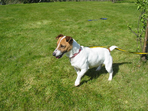Dogs To Be Rehomed For Free