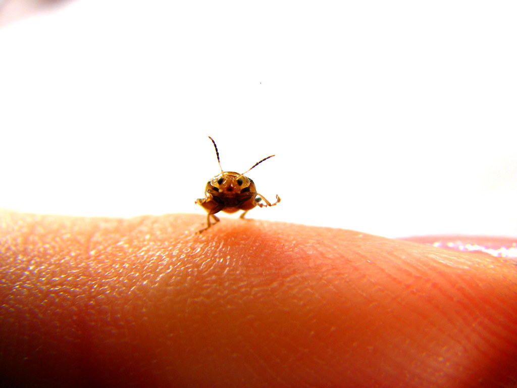 The World S Cutest Bug Ooooh I Simpy Love This Shot My
