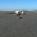 Baba & Desi at Ocean Beach