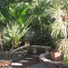 Palmetto Guesthouse Backyard Culebra, Puerto Rico