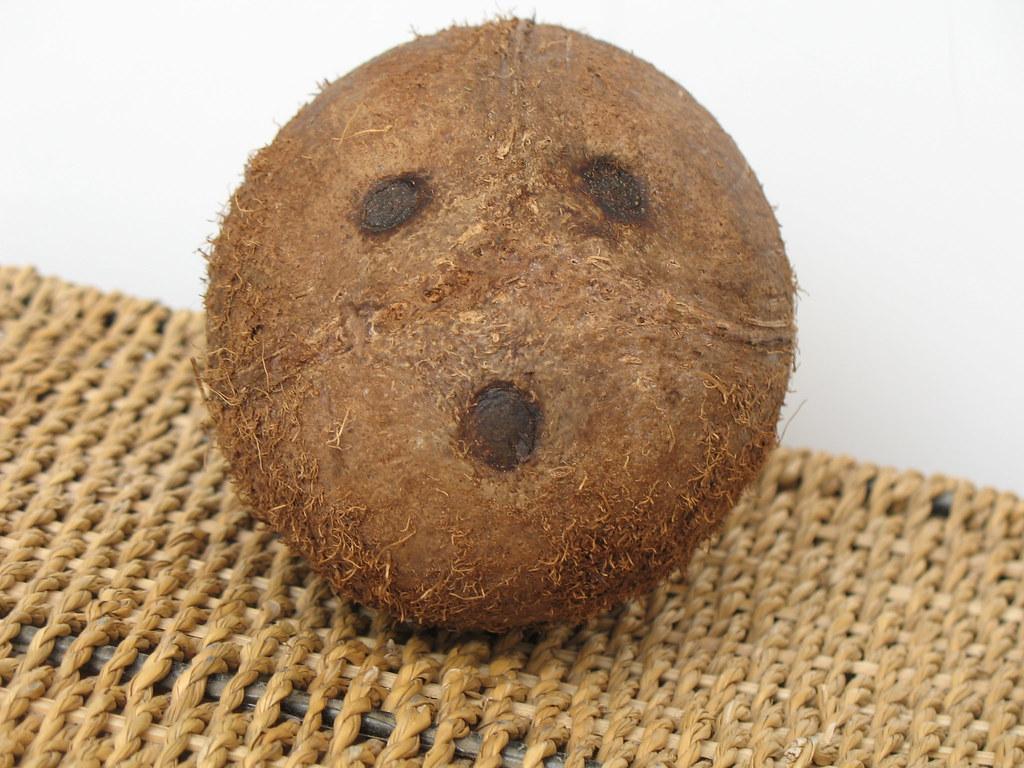 Coconuts On The Beach Menu Singer Island