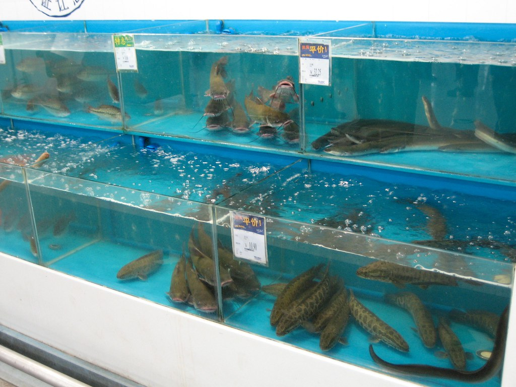 Live animals to eat for sale in china walmart for Fish food walmart