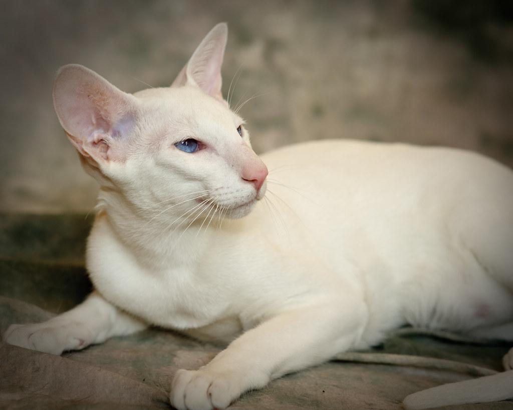 Cat Hair Static