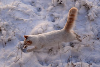 Flying Cat | by Rob Lee
