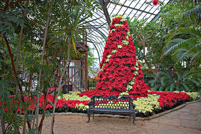 Birmingham Botanical Gardens Poinsettia Tree This Amazing Flickr