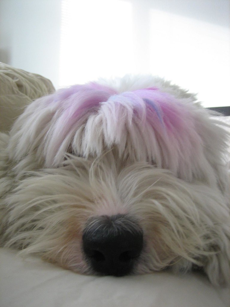 Dog With Pink Nose Breed