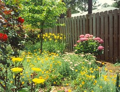 My garden in Sumter SC June 1992 | by snow41