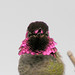 Anna's Hummingbird - male