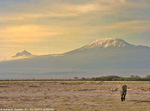 Elephant below Mt Kilimanjaro IMG_5916 | by WildImages