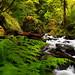 Bridal Veil Falls Creek 2