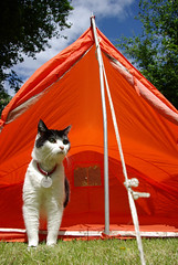 Pippy the camping cat | by snappybex