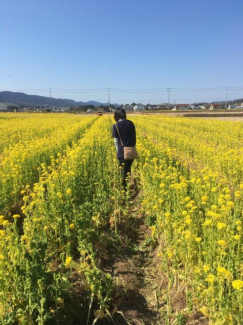 菜な畑ロード2017