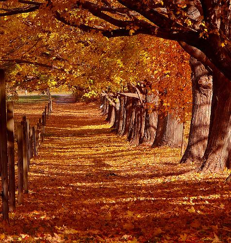 autum landscape autum terry taylor flickr