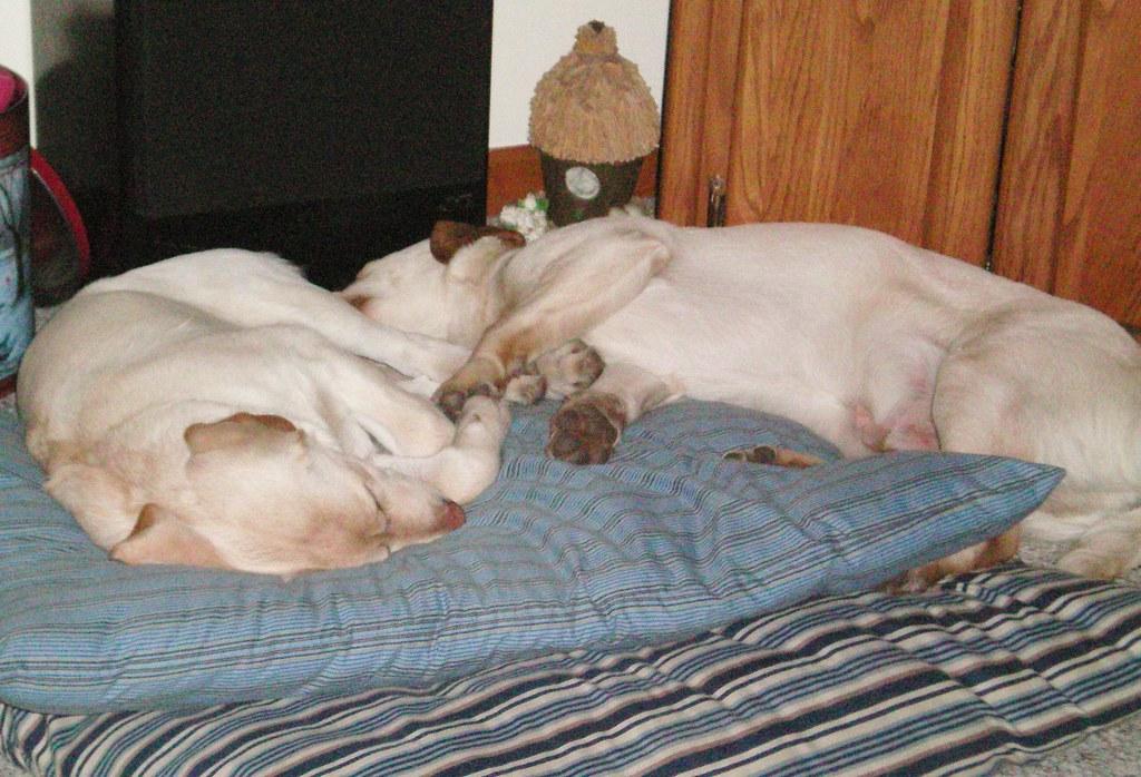 Sleeping Sister  Brother  We Love Snuggling  Aj  Flickr-1689