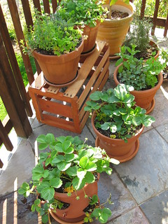 container garden on the patio | by thomas pix