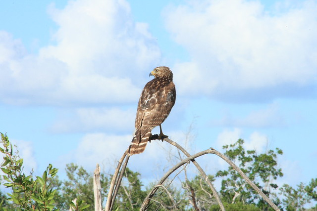 Everglades National Park 12-1-07 132