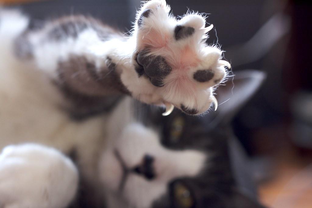 top 10 clumping cat litter
