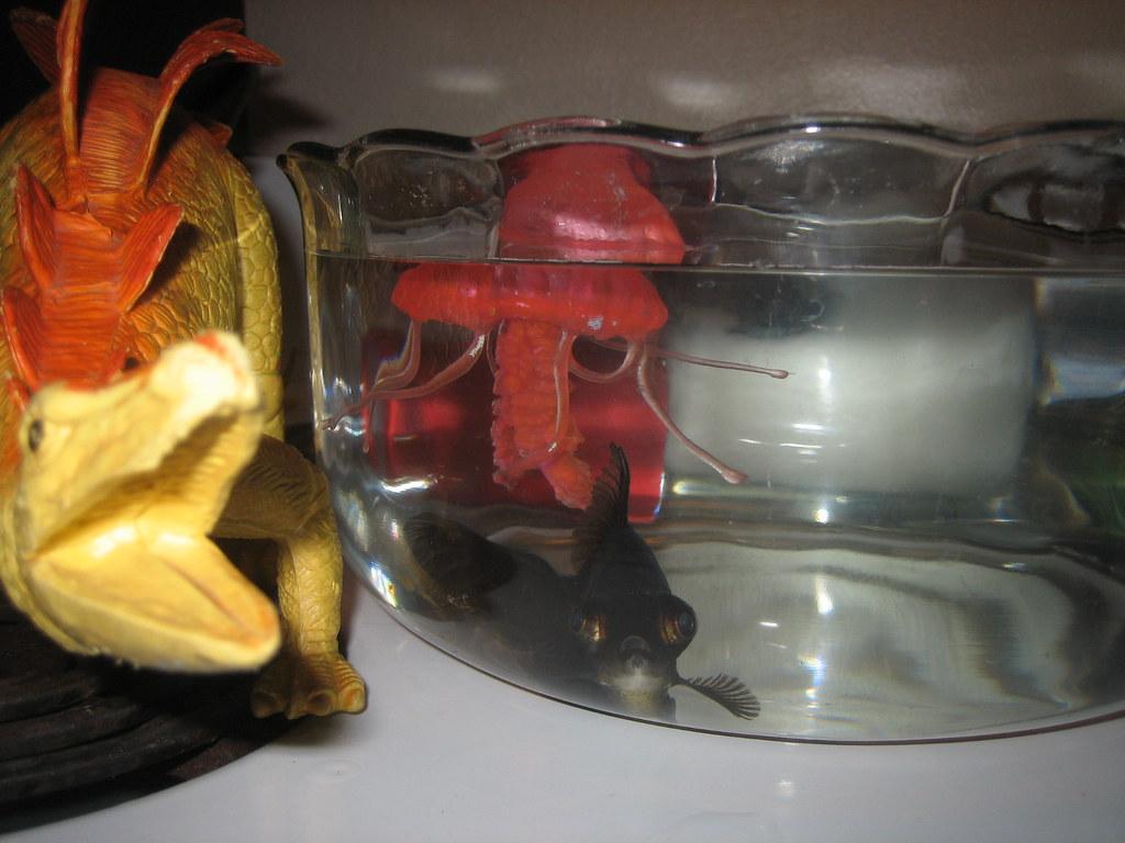 Crazy black fish katy warner flickr for Crazy fishing vr