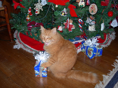 A Cats Christmas | by cynthia.haake