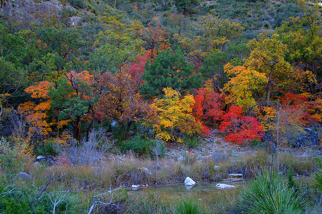 West texas fall mckittrick creek mckittrick canyon for West fall