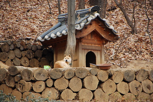 korean dog house | by riNux