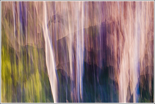 20110507. Camera painting. Spring. Trees. 9746. | by Tiina Gill (busy)