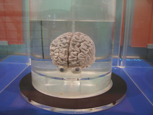 Singapore Science Park - A Real Human Brain! | AshStorm ...