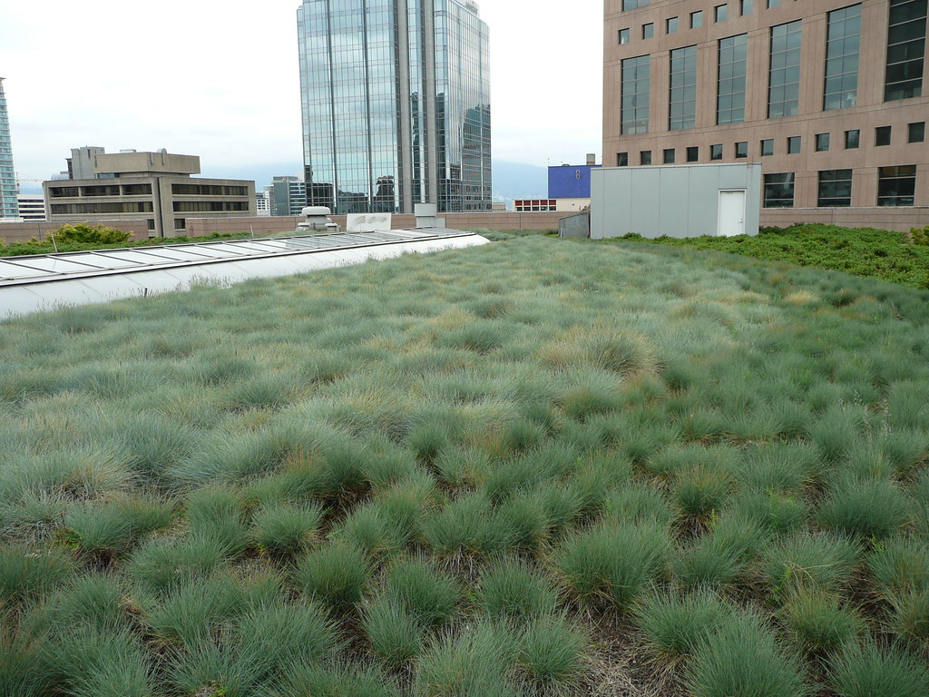 Vpl roof garden wild grass kcxd flickr for Wild grass gardens