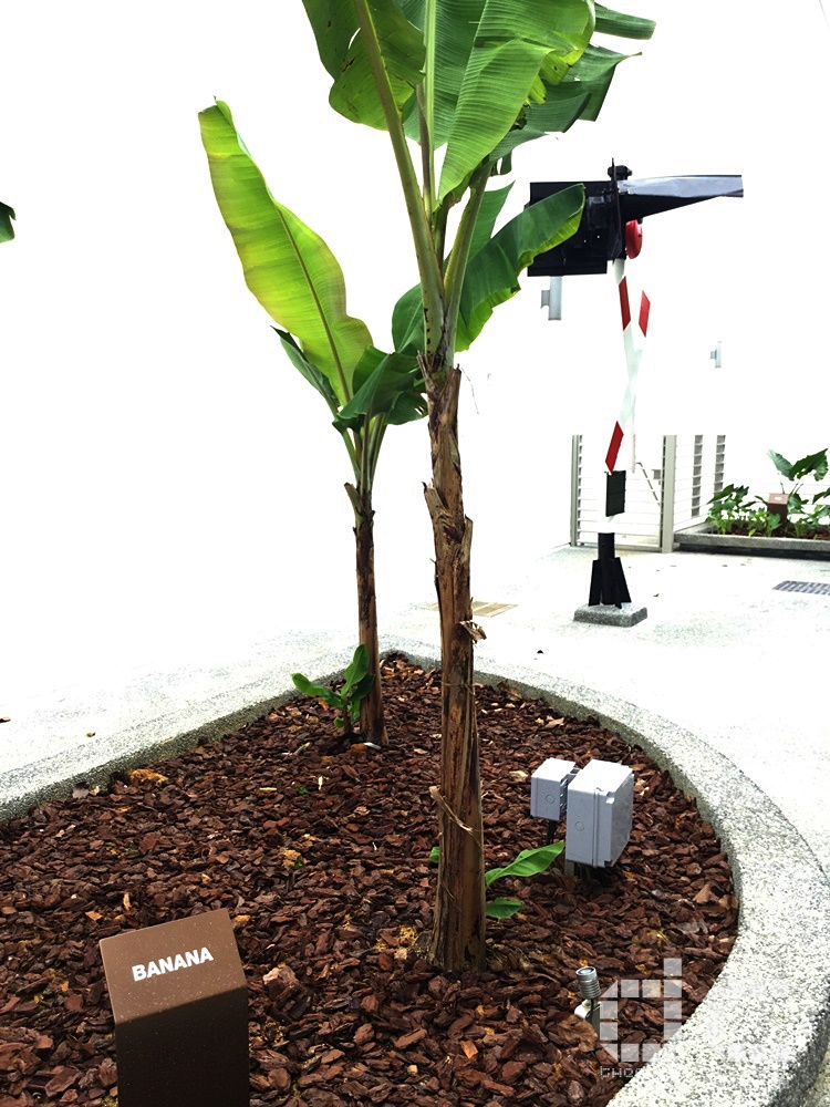 fall of singapore, ford factory, ford motor factory, japanese occupation, museum, old ford factory, second world war, syonan, world war 2, ww2, wwii,syonan gallery,syonan garden,banana