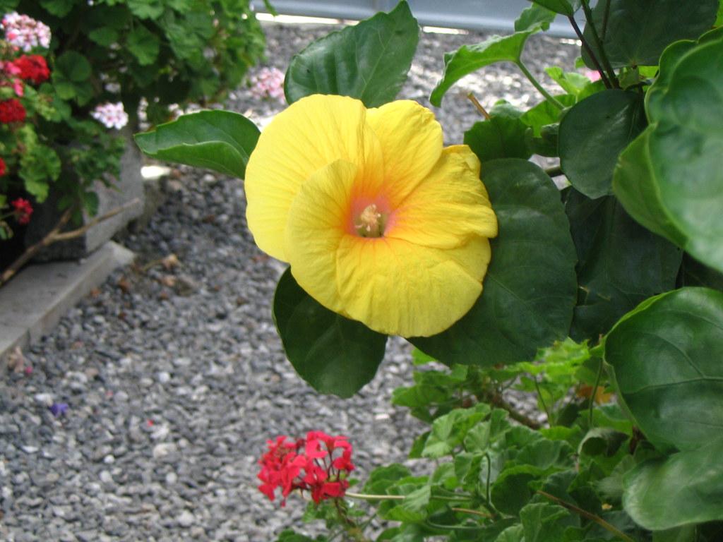 Fleur De L Ile Maurice 0163 Mariemadorleans Flickr