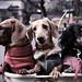 I met 3 puppies in Ueno Park