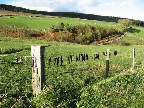 Moles onna fence | by virtualsue