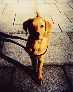 Dog Friendly Near Lslf