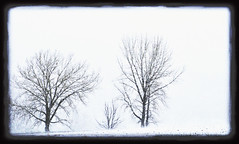Bare Trees in Snow | by david slauson