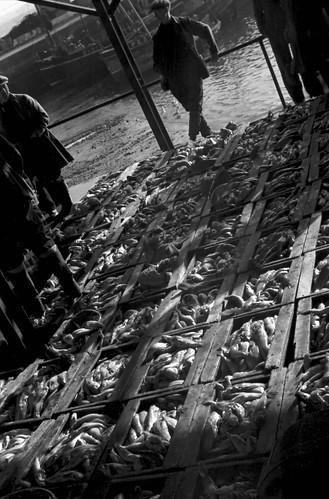 1504 Newlyn Fish Market