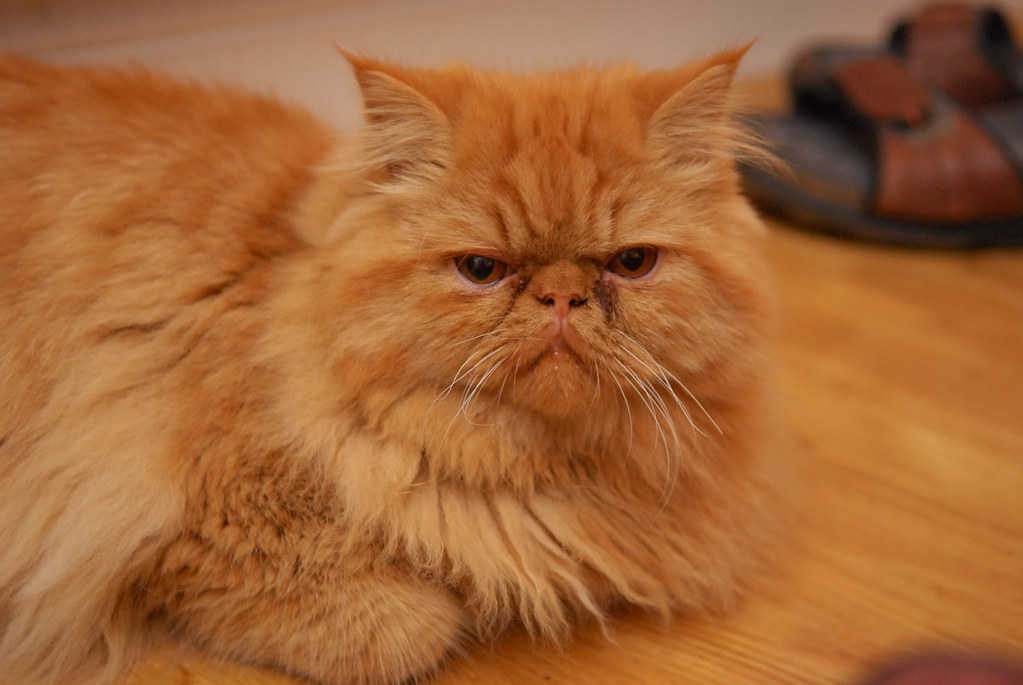Hamish Looking Grumpy Hamish Susannah Grant Flickr