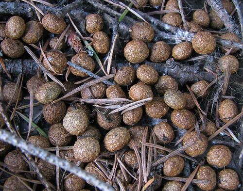 Fertilizer Pellets