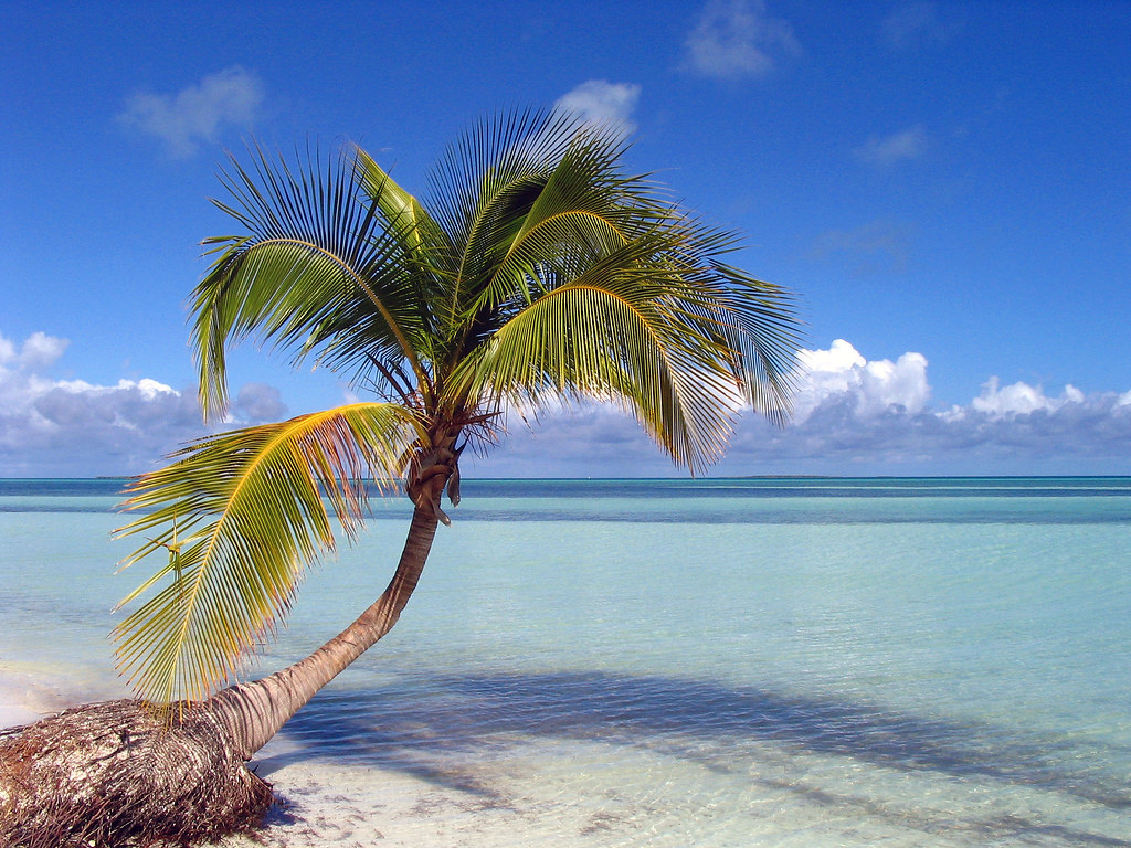 Palm tree on the beach a fallen palm tree on cayo coco bea flickr palm tree on the beach by mrhaich voltagebd Image collections
