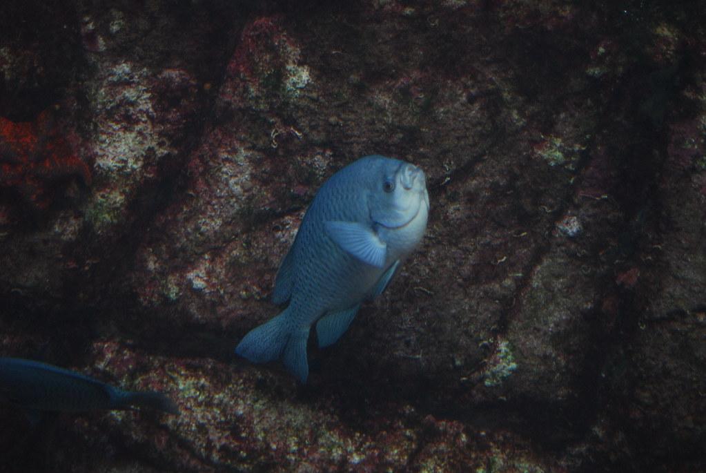 Monterey Bay Fish Grotto Crab Cake Recipe