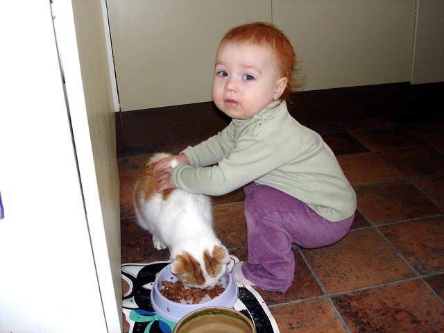 Cat Whisperer Show On Animal Planet