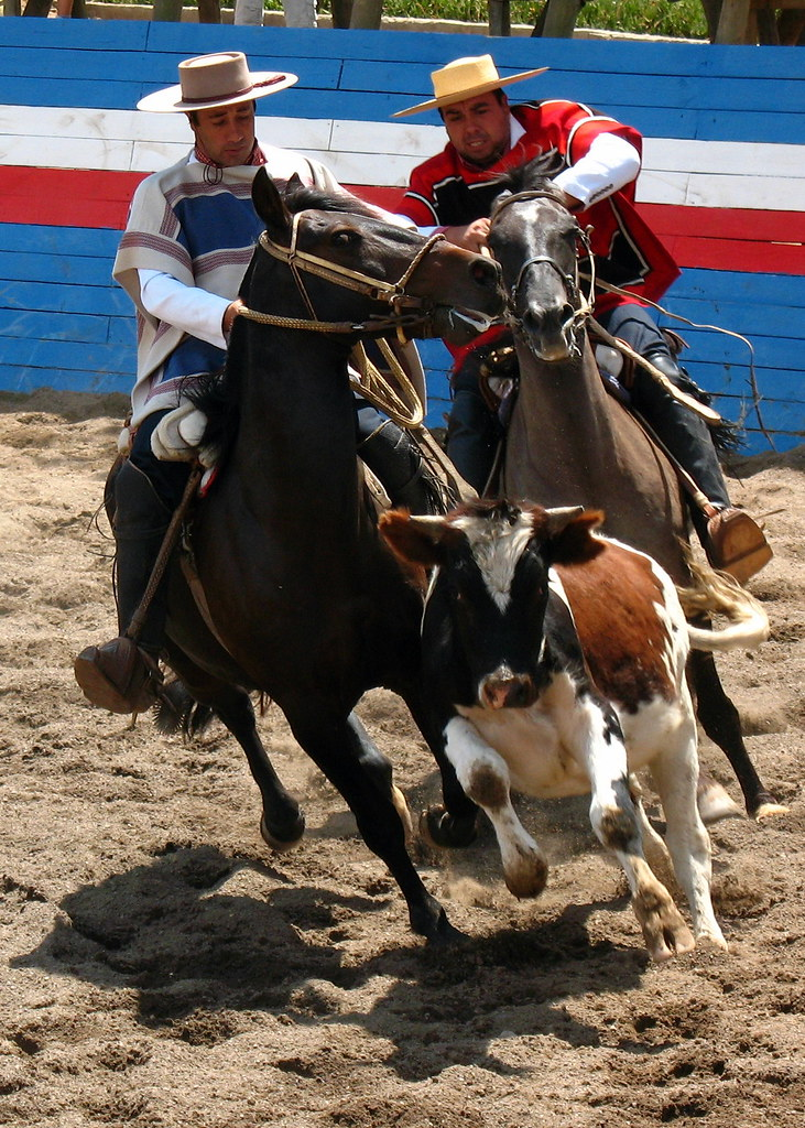 Chilean Rodeo | While driving around the Viña del Mar area ...