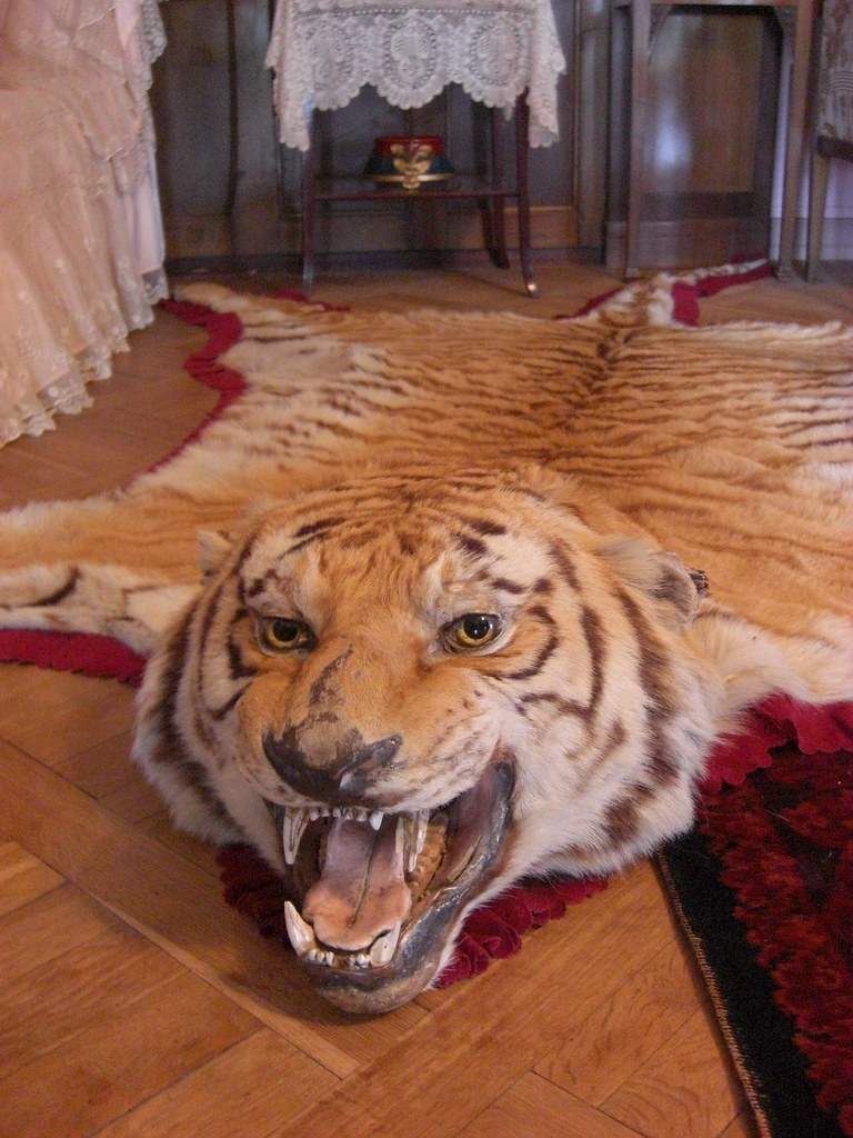 Tiger Rug Inside The Pavlovsk Palace Russia Rm996s