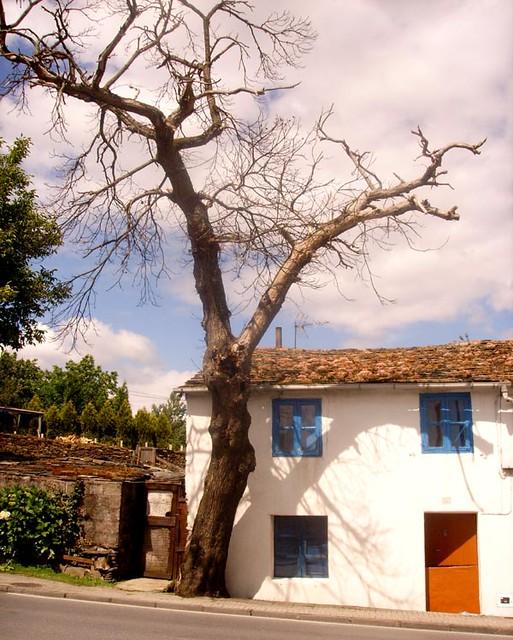 El arbol seco arbol seco en la entrada de lugo que for Que significa dibujar arboles secos